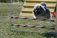 Arena Space for Dog Agility