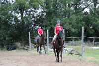 Summer working student position on horse farm must be 14yrs +