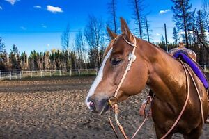 4 year old Registered APHA