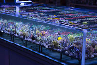 Saltwater Fish Store (Canada Corals) in Mississauga!