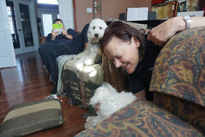 Professional Family Style, In-Home Dog Sitting Service London Ontario image 5