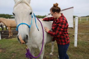 Equine Massage Therapy Services