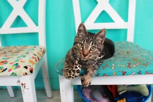Cat up for Adoption by Rescue