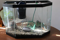 Fish tank, filter, air pump, food, net