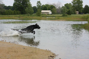 Seeking ponds, pasture or acreage for retriever training