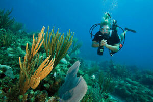 Become a certified Scuba diver now!!!