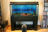 90 Gallon Aquarium with stand & everything else!