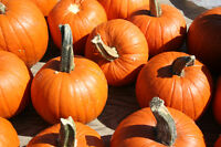 PUMPKIN CARVING WORKSHOP - carve the pumpkin, leave the mess!