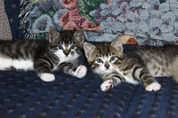 free cuddly kittens to good homes.