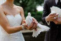Dove Releases (weddings)