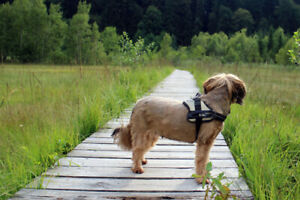 Introducing the incredible dog walking trails in York Region