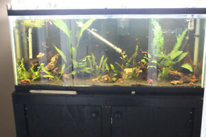 55G Aquarium Pick up in Sackville- No Deliveries