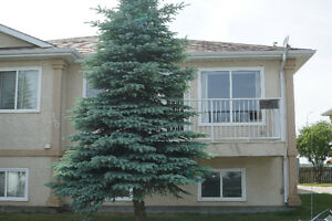 beautiful  north Lethbridge condo for rent available June 1
