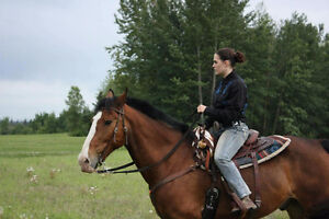 Horse training and colt starting!