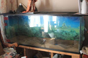 125 gallon Reptile tank with stand and lights
