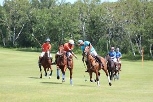 POLO GAMES! Free to watch!