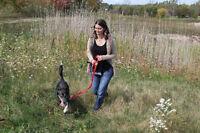 Dog Walker, Pet Sitter and Trainer