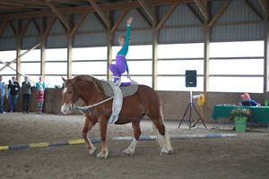 Equestrian Vaulting Lessons