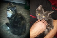 Brother and Sister Kittens (4 Months Old) Need A Loving Home.