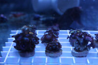 Fish and Corals too many for sale