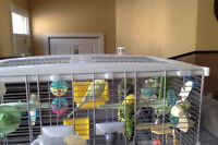 4 budgies with large cage & accessories included