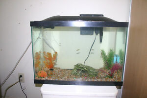 One day deal $45 - Tank, filter and accessories