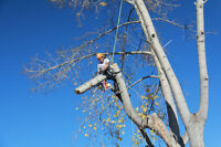 PROFESSIONAL TREE PRUNING AND REMOVALS