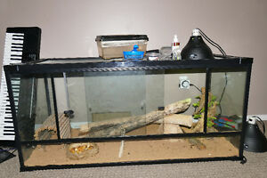 bearded dragons, large tank, heat lamp and supplies