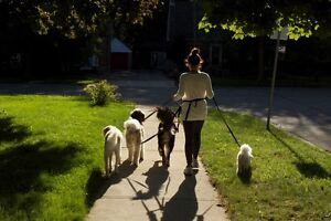 Professional and Reliable Pack Walks for Dogs Kitchener / Waterloo Kitchener Area image 1