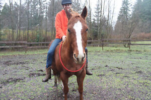 2003 sorrel QH kids/trail horse Campbell River Comox Valley Area image 5