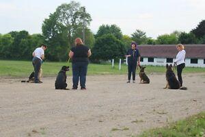 Dog Training - Problem Solving - St Thomas-Tillsonburg-London London Ontario image 10