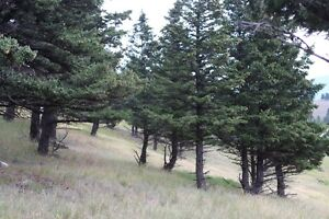 RESIDENTIAL LOT IN CROWSNEST PASS