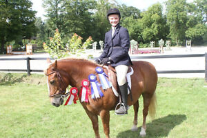 Lovely pony for Riding lessons :) Kitchener / Waterloo Kitchener Area image 10