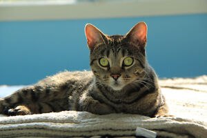 """""""Dessy""""...  looking for a new home!"""