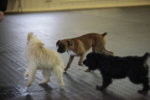 Puppy Socialization Classes