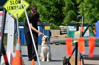 Canadian Guide Dogs Open Tour Day