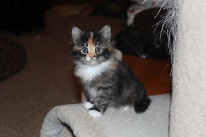 FREE Kittens Looking for Homes