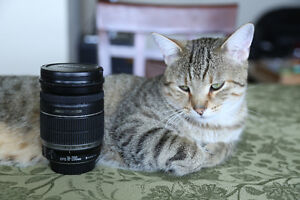 Canon 18-200mm IS Lens: Pet free home