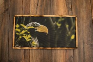 Framed Canvas/ Wall Art of Eagle