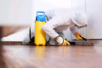 PEST EXPERTS & ALL WILDLIFE REMOVALS  24HOURS LOWEST RATES