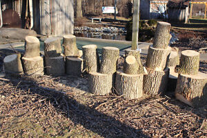 Dry Firewood Peterborough Peterborough Area image 3