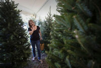 CHRISTMAS TREES DELIVERED $60 769-9192