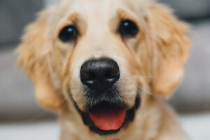 SPOIL YOUR PET! -- A New Online Store for Your Pets!