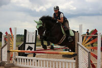 Experienced Equestrian Looking for Horse Board