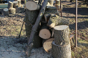 Dry Firewood Peterborough Peterborough Area image 2