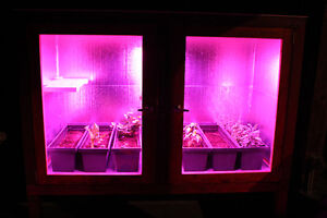 All season Greenhouse with LED light technology