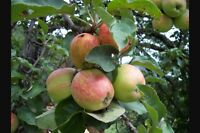 Offre service pour ramasser vos pomme