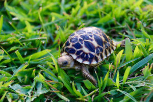 im looking for adopt tortoise