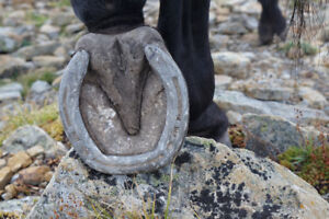 Farrier Services - Trimming, shoeing and therapeutic systems