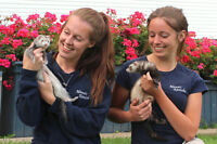Pet Services: Boarding BIRDS-RABBITS-TURTLES-FERRETS...MANOIR KA
